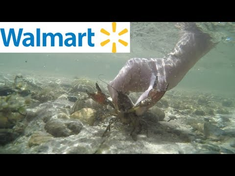 Walmart Catch N' Cook Challenge - Crawfish And Trout Edition!