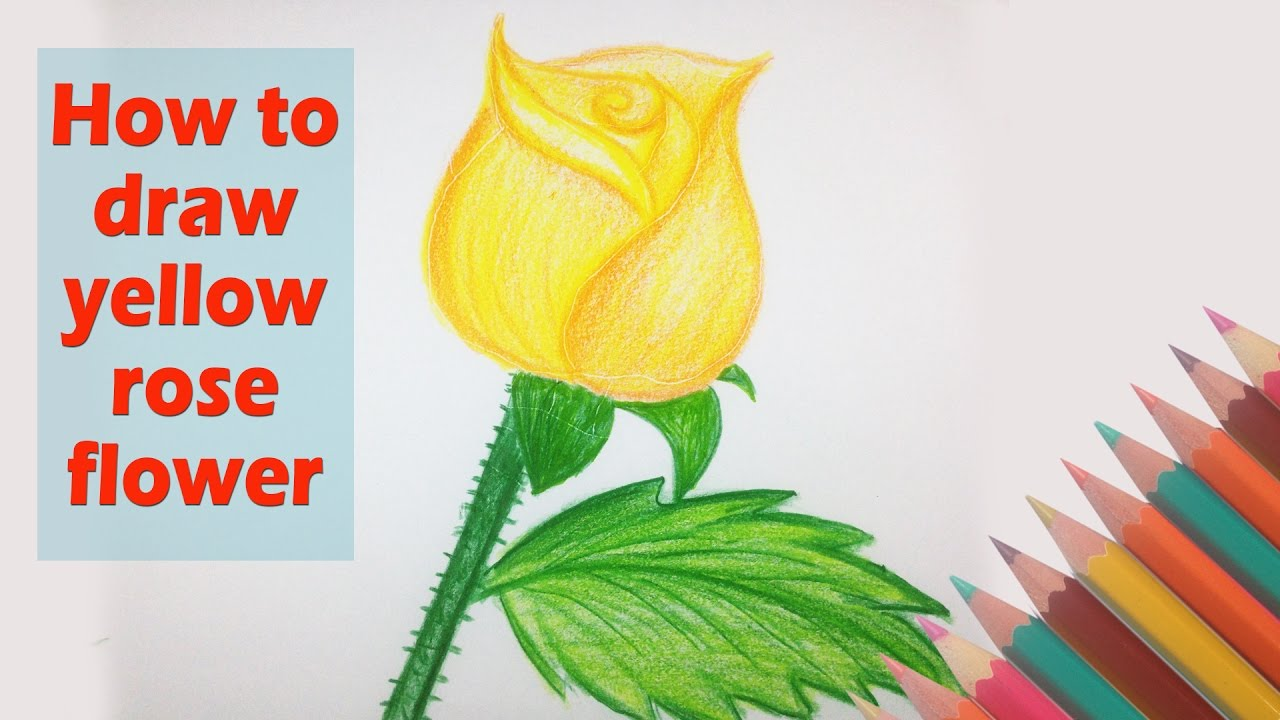 How To Draw Yellow Rose Flower Drawing A Beautiful Flower Video