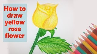 yellow rose draw flower drawing flowers drawings