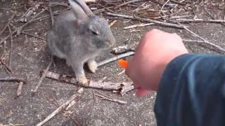 okunojima-rabbit-island