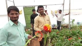 झरबेरा फुल कि खेती से साल में 24 लाख कि कमाई।gerbera flower farming