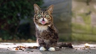 When Lil BUB encountered the neighborhood cat, Big HERMES