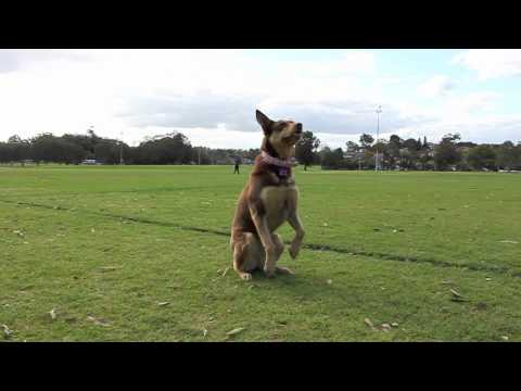 Dog Potential - Training With Tess