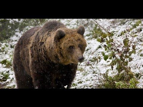 Discover Romania Wild Carpathia Mountains of Transylvania FULL HD
