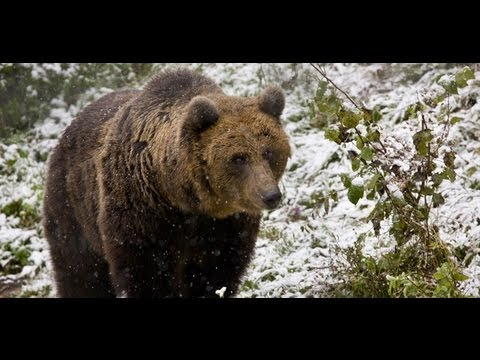 Discover Romania Wild Carpathia Mountains of Transylvania FULL HD