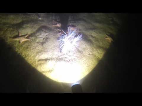 Prawn Diving - Bicton