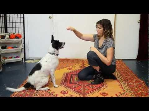 How to Teach Give Paw, High Five, Wave Hello - Dog Training