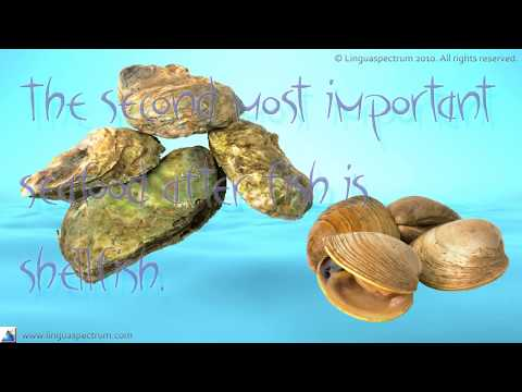 English Seafood Idioms And Expressions – Improve Your English Vocabulary