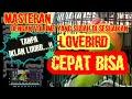 Masteran Lovebird Paud Ngetik Ngekek Panjang  Mp3 - Mp4 Download