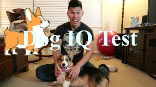 Testing My Corgi's Intelligence - Dog Iq Test