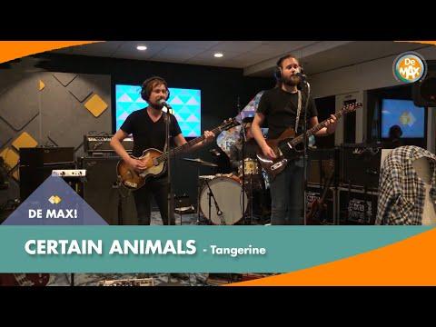 Certain Animals - Tangerine | De MAX! Kantoorsessie | NPO Radio 5