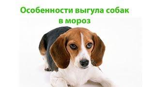 Сколько Гулять С Собакой  В Мороз & Как Правильно Выгуливать Собаку В Мороз. Ветклиника Био-Вет