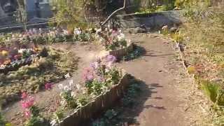 オープンガーデン 1月に咲く花