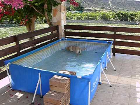 Swimming Pool Available To Cypopet Dog Boarding Visitors Cyprus Youtube
