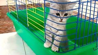 Спасение котенка из клетки. Кот Макс за решеткой