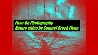 NATURE VIDEO BY SAMUEL BROCK FLYNN