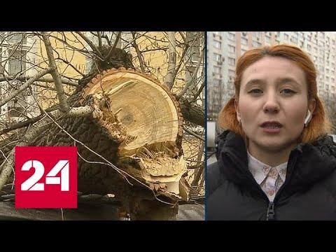 Из-за штормового ветра в Москве МЧС рекомендовал не ездить на личном транспорте