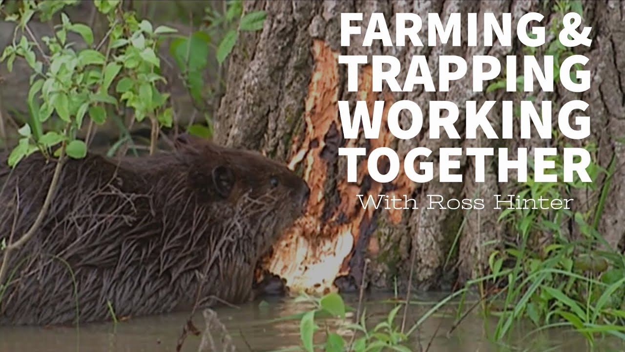 Trapping and Farming - Working Together