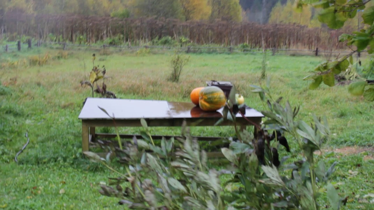 Осень в деревне - YouTube