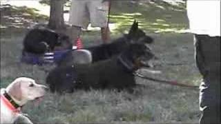 Las Vegas Dog Training Class - Sit Means Sit Dog Training