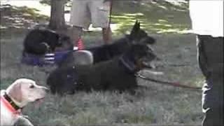 Las Vegas Dog Training Class - Sit Means Sit Dog Training