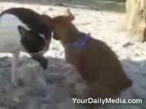 Horny Odie The Wonder Dog