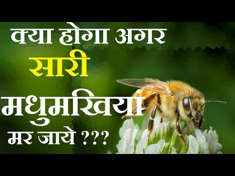 WHAT WILL HAPPEN IF ALL HONEY BEES DISAPPEAR ???? | SCI-DOSE