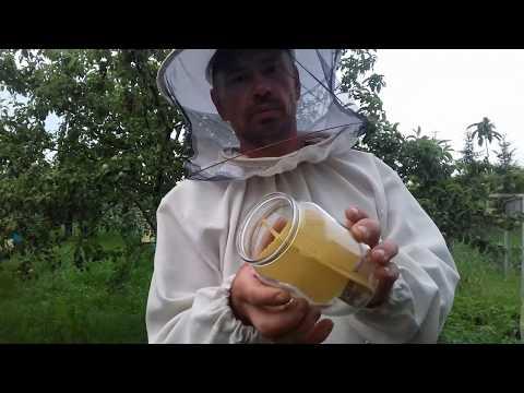 Вопрос: Как получают пчелиный мед прямо в стеклянных банках?