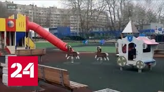 СК просит откликнуться свидетелей стрельбы на детской площадке в Кингисеппе - Россия 24