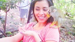Monkey Madness At Monkey Jungle - So Much Fun!