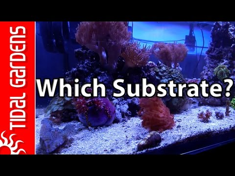 What is the Best Substrate for your Reef Tank?