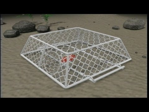 Trap fishing for cuttlefish 1996 youtube for Homemade fish traps