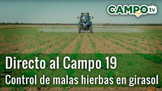 Directo al Campo 19 | Sanidad vegetal en girasol