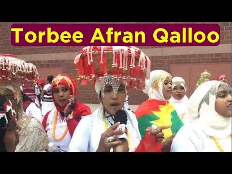 Oromo news Torbee Afran Qalloo