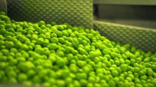 Frozen peas, picked at the highest point of freshness