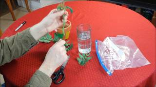 How To Grow A Tomato Plant From A Cutting / Sucker - It