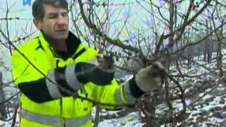 Repeat youtube video Zimska rezidba voćaka