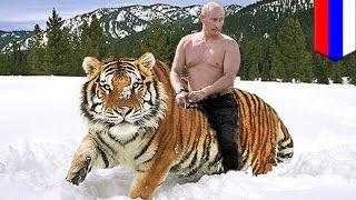 ロシアのプーチン大統領が野生に解放したトラ3頭のうち1頭が、中国でヤ...