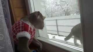 Семён и Шпрот ( макака и кот)