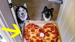 My Huskies Order Pizza Without Me!