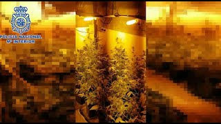 Dos detenidos en Navarrete por tráfico de marihuana