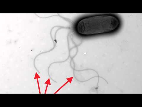 Mutant bacteria evolve in a weekend