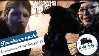 Familienzuwachs | Straßenhund aus Bulgarien🐶🇧🇬