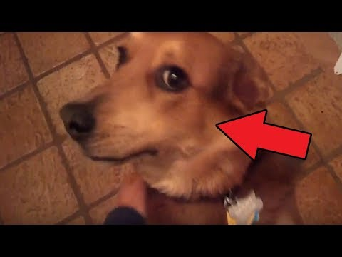 Top 5 Guilty Dogs AT CHRISTMAS TIME | DECEMBER 2017