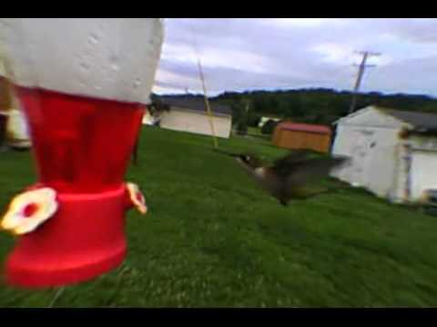 hummingbird2 freeview