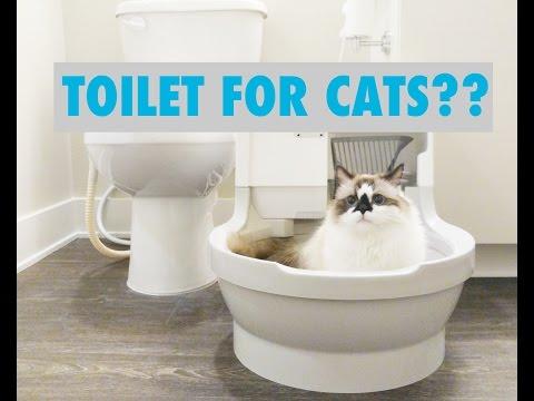 Albert Munchkin Cat Tries the CatGenie Self-Cleaning Litter Box