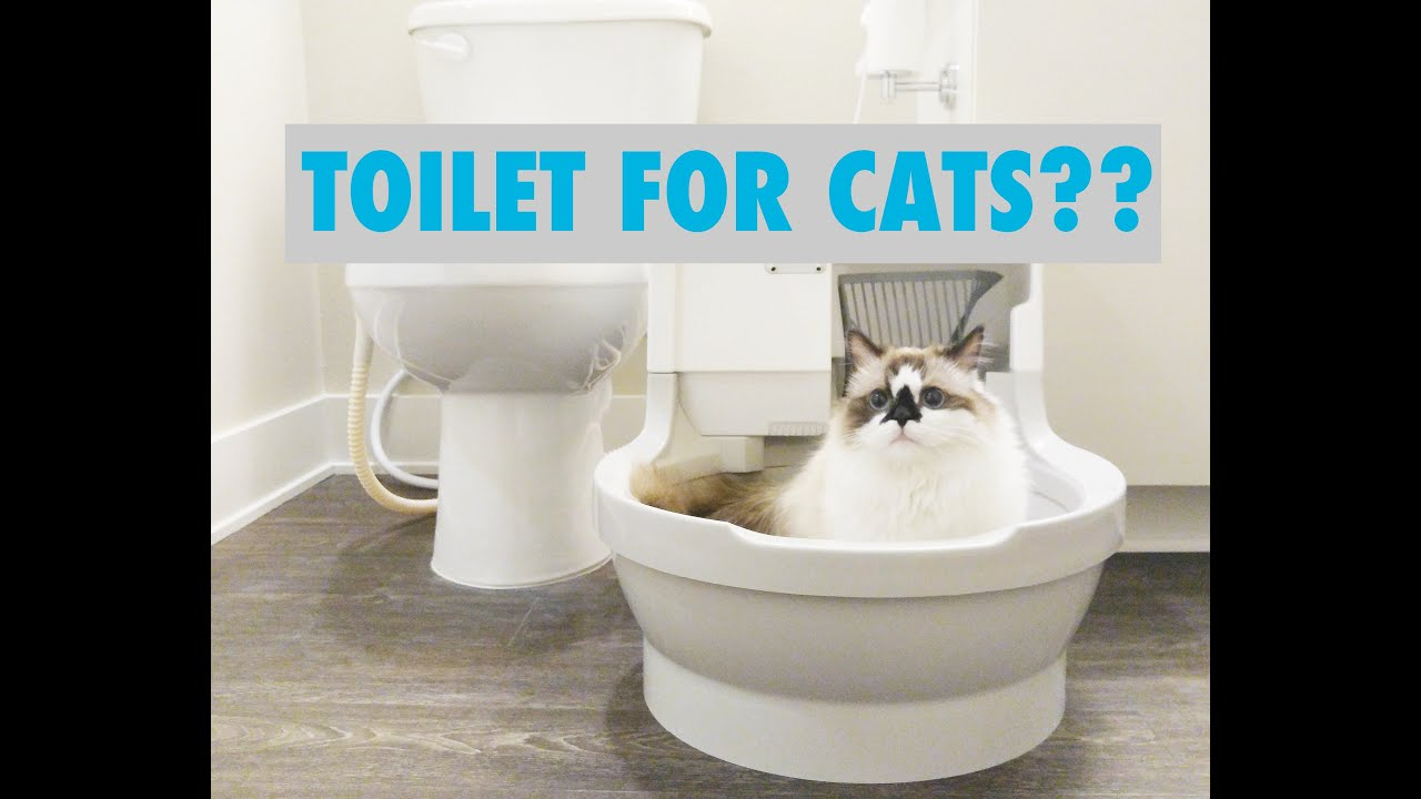 Automatic Cat Litter Box Youtube