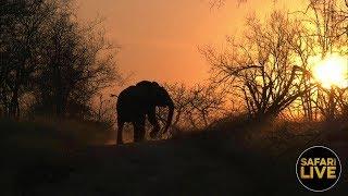 safariLIVE - Sunset Safari - September 1, 2018