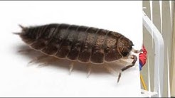 Cummings Termite & Pest Control -- Fountain Hills, AZ
