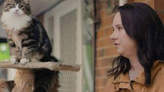 Meet A Supreme SIBERIAN CAT | Ekka Paws & Claws w/ Mel Buttle